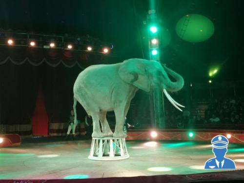 Domenica al circo08