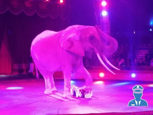 Domenica al circo